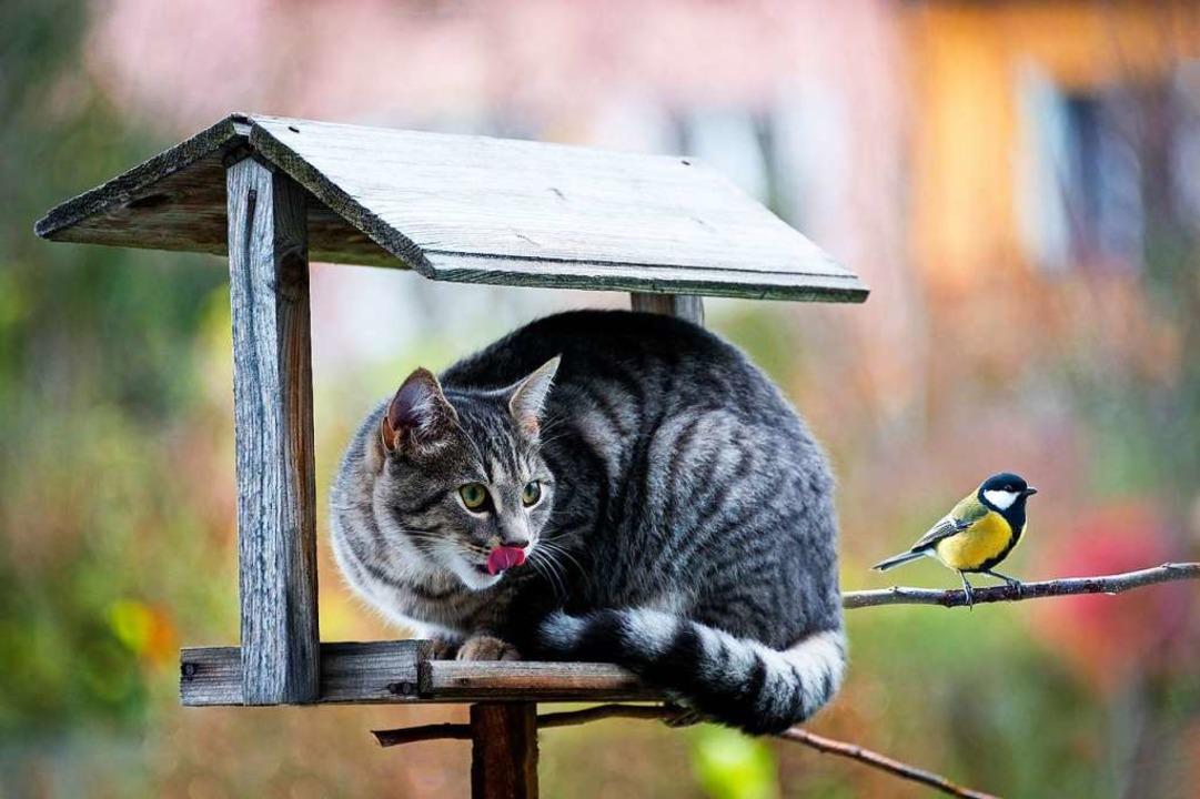 Hat die Kohlmeise eine Chance?  | Foto: Vera Kuttelvaserova - stock.adobe.com