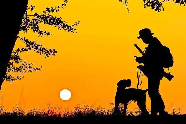 Am Samstag wird im Röttlerwald Jagd auf Wildschweine gemacht