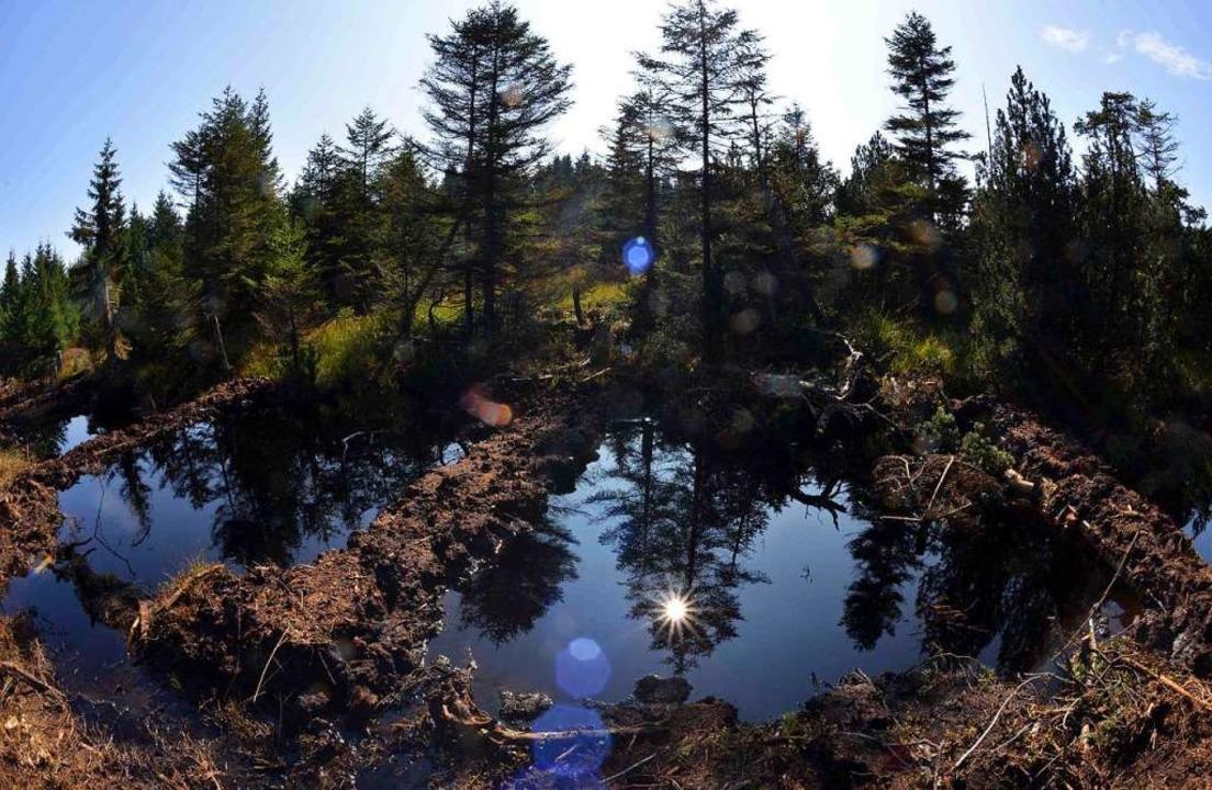 Die Revitalisierung dieses Moors  im E...ora (Tschechien) gilt als vorbildlich.  | Foto: Hendrik Schmidt
