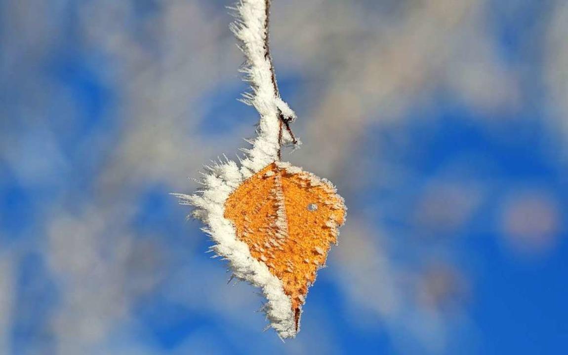 Im November gab's auch Frost    Foto: CHRISTOF STACHE (AFP)