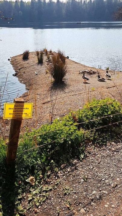 Eine künstlich angelegte Landzunge erh...erstoffgehalt des Bergsees nur gering.    Foto: Axel Kremp
