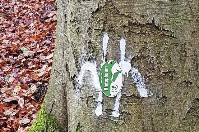 Baumsterben sorgt für Minus