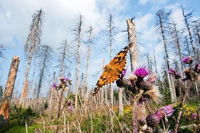 Land muss fast 340 Millionen Euro für Wald-Aufforstung in die Hand nehmen