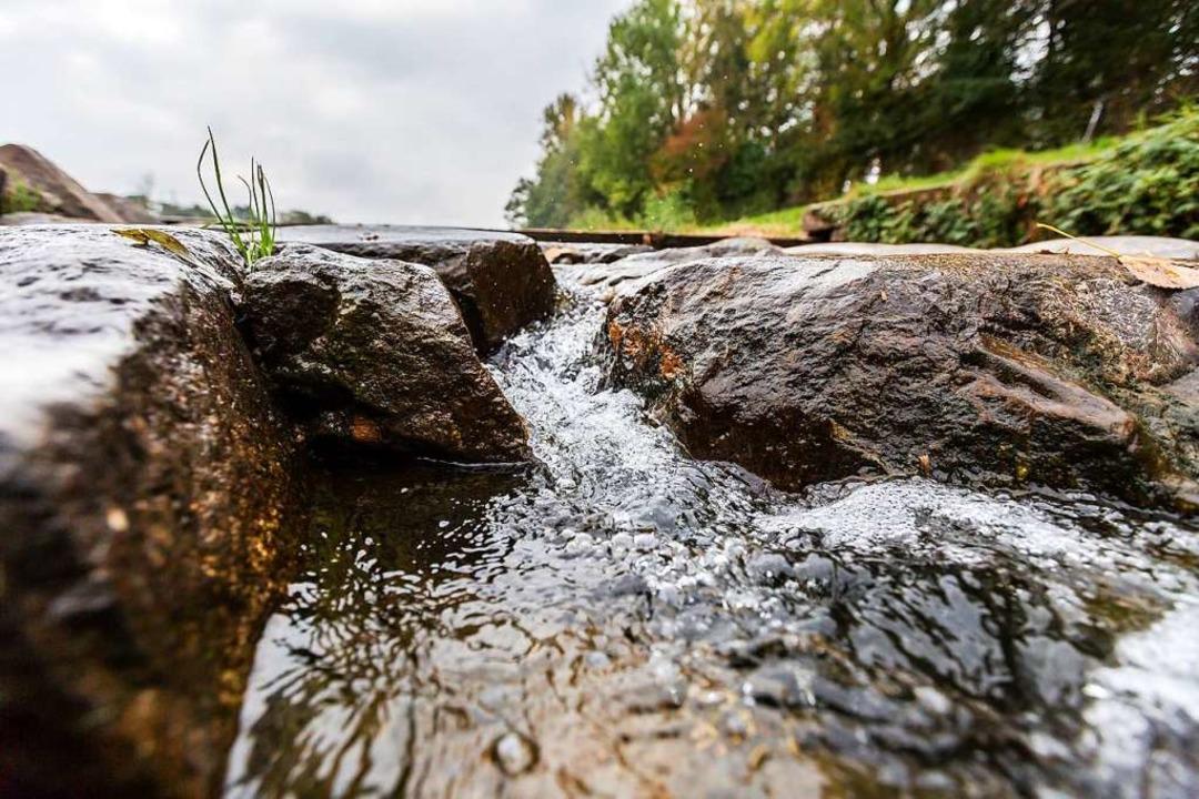 Wie gut ist die Wasserqualität?  | Foto: Carlotta Huber