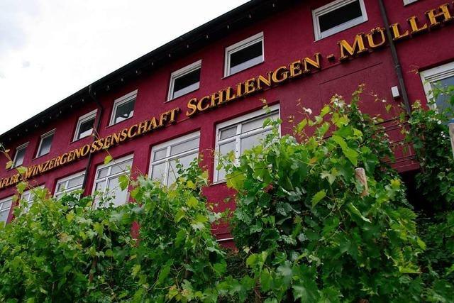 WG Schliengen-Müllheim setzt positive Entwicklung fort
