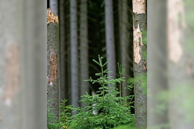 Neue Bäume kosten 340 Millionen Euro