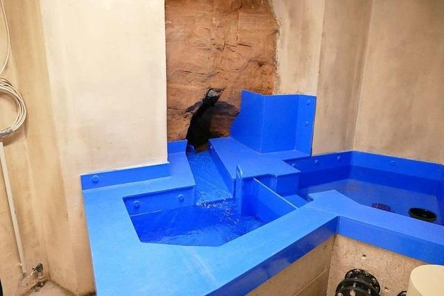 Die Vogelbrunnenquelle in Ettenheimmünster ist saniert und liefert Wasser