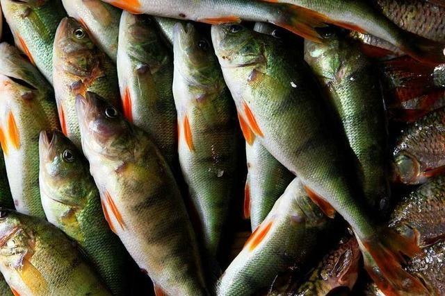 Zehn bedrohte Arten erholen sich leicht