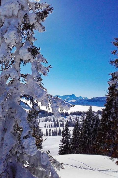 Winterpracht – Sonne lacht  | Foto: Oase Alpin Center