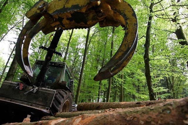 Der Klimawandel macht dem Wald zu schaffen