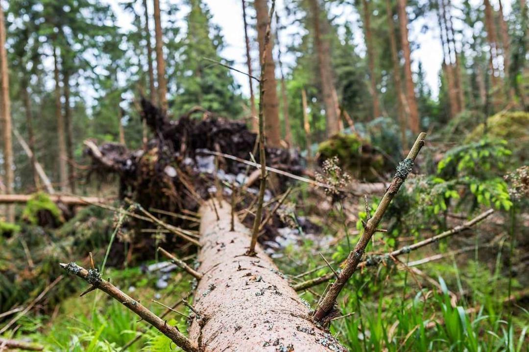 Wann wird der Wald sich selbst überlassen?  | Foto: Carlotta Huber