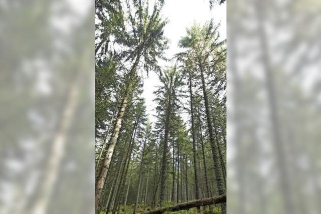 Forst wird neu geordnet