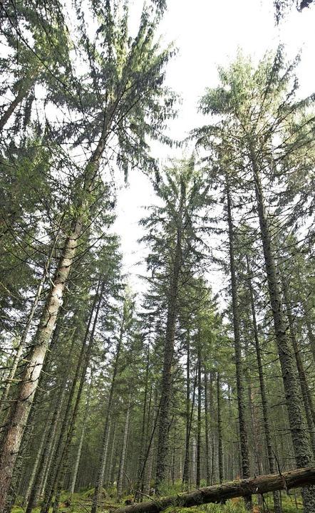 Ein gesunder Wald braucht Pflege.  | Foto: Patrick Seeger