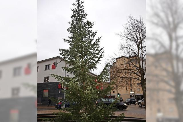 Bäume kündigen Weihnachtsmarkt an