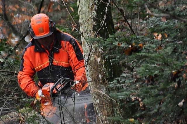 In Schopfheim hat eine große Baumfällaktion begonnen