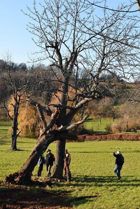 Der Totholzbaum hat seine Position erreicht.  | Foto: Andrea Gallien