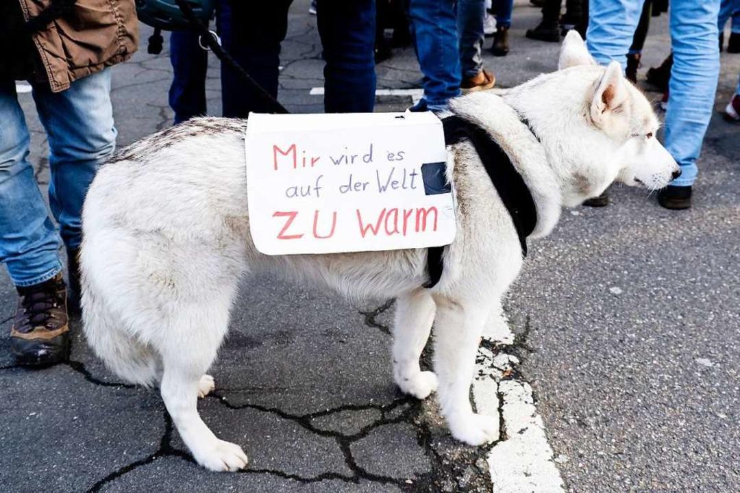 Vierbeinige Unterstützung für Klimaschutz-Demonstranten  | Foto: Frank Molter (dpa)