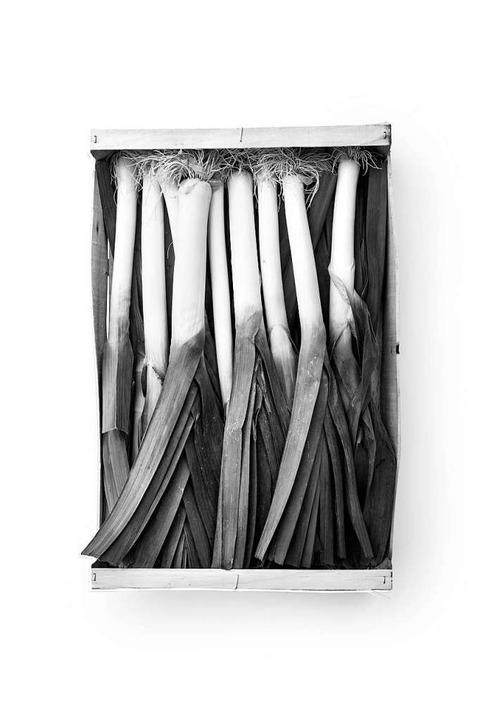 Impressionen aus der Ausstellung  | Foto: Collections Typologie