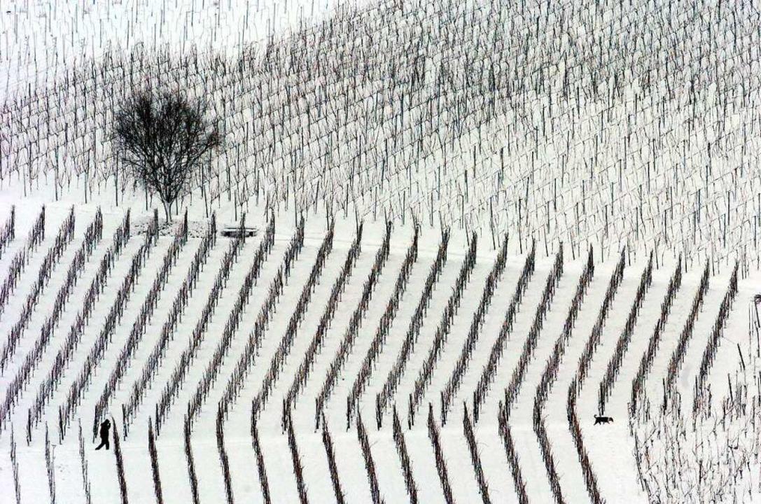 Schraffiertes  Land zu jeder Jahreszei...em Markgräflerland Nimbus und Gepräge.  | Foto: Rolf_Haid