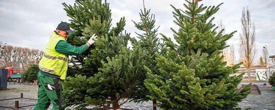 Weihnachtsbaumverkäufer verschwindet mit dem Tageserlös