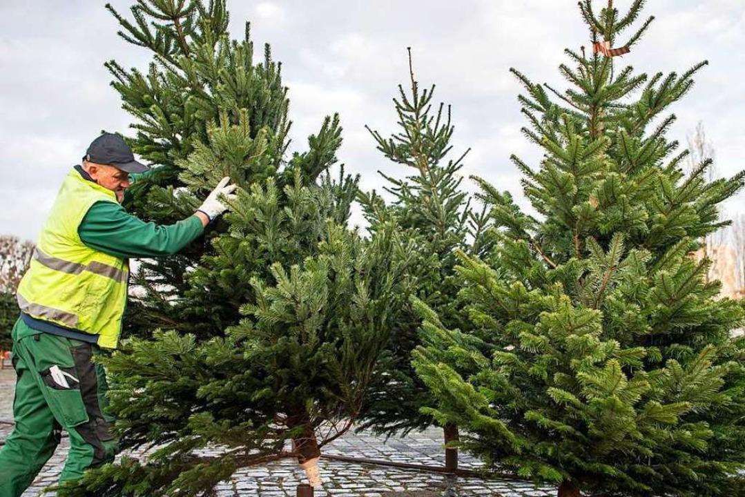 Ein Weihnachtsbaumverkäufer ist in Rhe...men eines Tages abgehauen (Symbolbild)    Foto: Sina Schuldt (dpa)