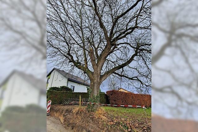 RAUSGEFISCHT: Mein Freund, der Baum