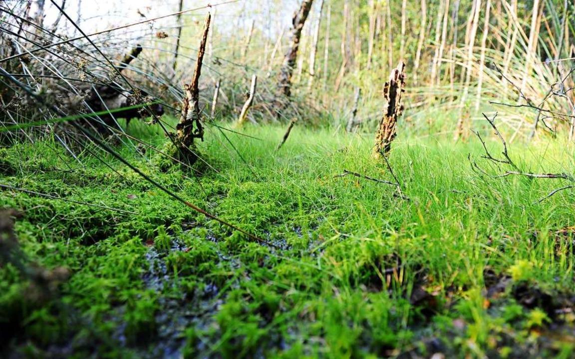Ein Moor in Schleswig-Holstein  | Foto: Daniel Reinhardt (dpa)