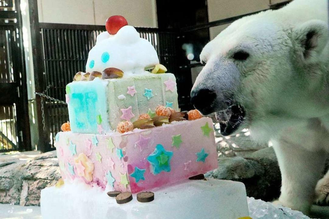 Dass dieser Eisbär in einem japanische...rte bekam, ist ein Fakt, keine Satire.  | Foto: - (dpa)
