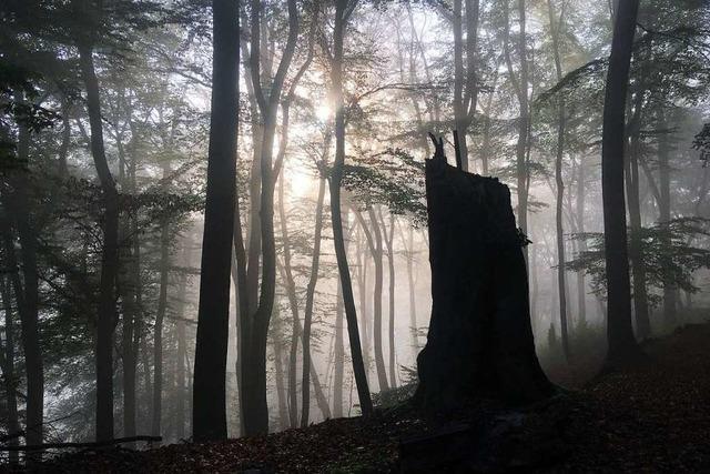 Bis Februar werden in Weil am Rhein 150 Bäume gefällt