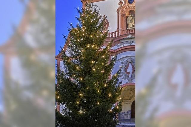 Woher die Weihnachtsbäume kommen