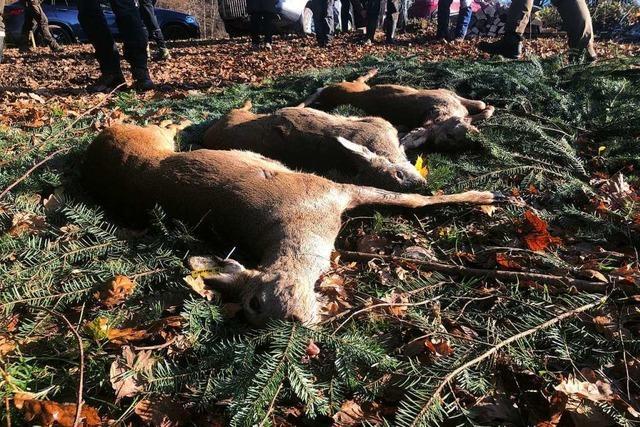 Auf der Jagd Wild aus dem Wald zu treiben ist eine harte Angelegenheit