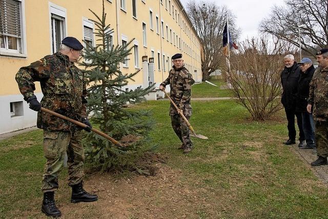 Weihnachtsbäume gesetzt