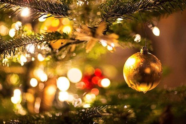 Schwarzwälder Landwirte bauen auch Weihnachtsbäume an