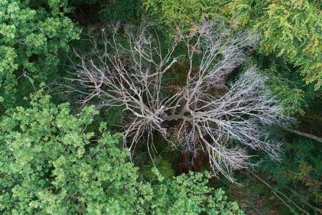 Waldarbeiter stürzt bei Baumfällarbeiten in Künabach 30 Meter bergab