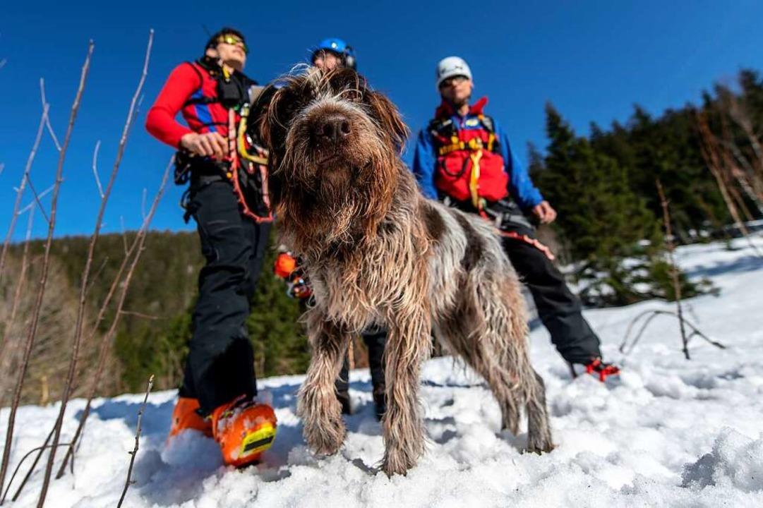 Lawinensuchhund Joschi der Bergwacht h...rer Rettungsorganisationen mitgemacht.  | Foto: Patrick Seeger