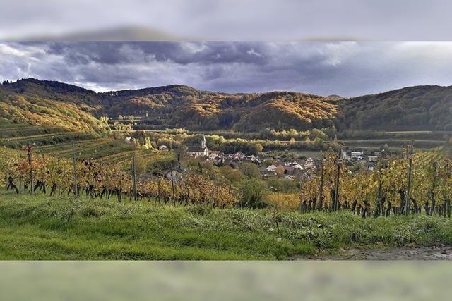 Weinbau im Naturschutzgebiet