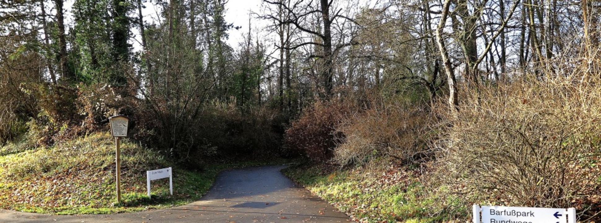 Der Trockenstress setzt den Bäumen zu:...gspflicht entlang der Wege im Kurpark.  | Foto: Dorothee Philipp