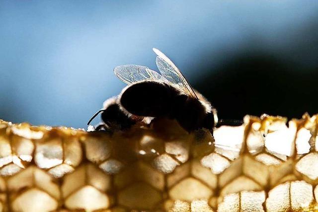 Bienenfreunde beerdigen Volksbegehren – Einigung auf Kompromiss