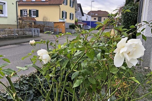 Blüten in Mahlberg