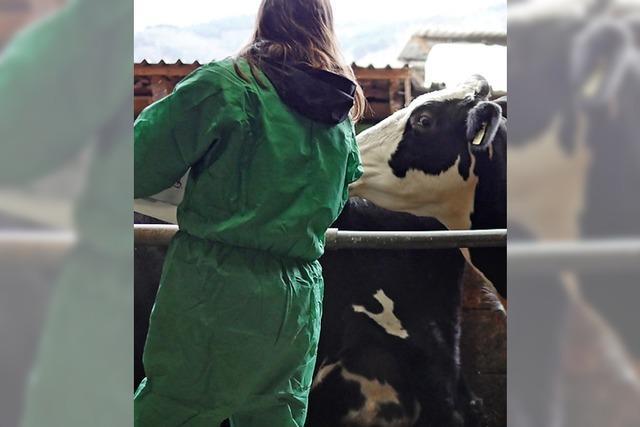 Kühe und Schafe werden zwangsgeimpft