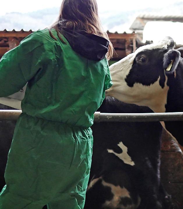 Tierärzte des Veterinäramtes impften Kühe in Wittnau.  | Foto: Jannik Jürgens