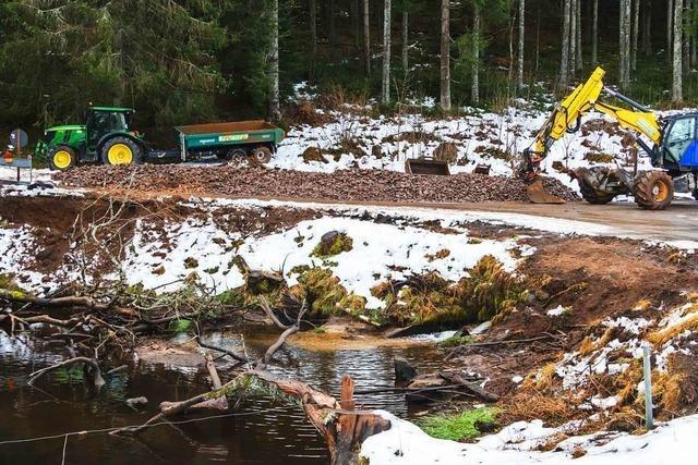 Die durch einen Biber geschädigte Straße im Schwarzwald wird saniert