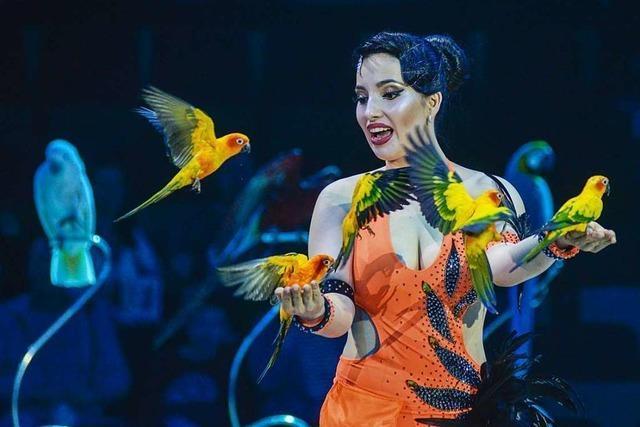 Artisten, Clowns und Papageien in der Manege