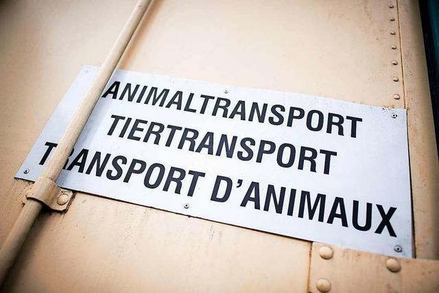 VGH: Circus Krone darf mit Wildtieren in Ulm auftreten
