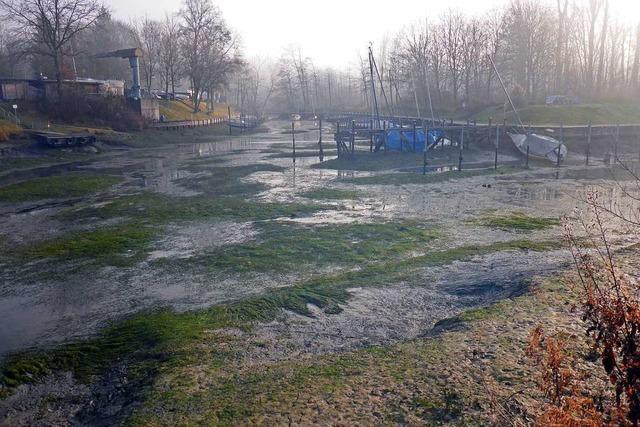 Wasserstand am Altrhein steigt nach drastischem Absinken langsam wieder