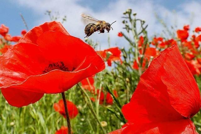 Erleichterung, aber auch Kritik nach Bienen-Kompromiss