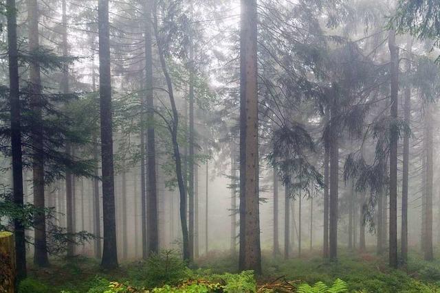 Nothilfe für den Wald im Südwesten