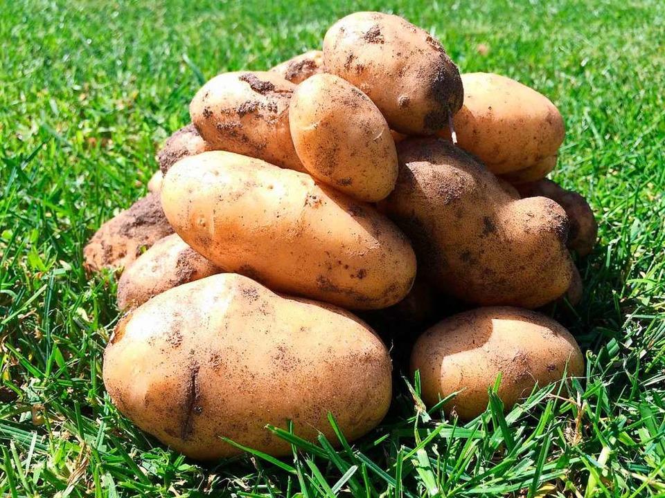 Aus Kartoffelstärke wird der Saugkern hergestellt.  | Foto: GreenTec Awards