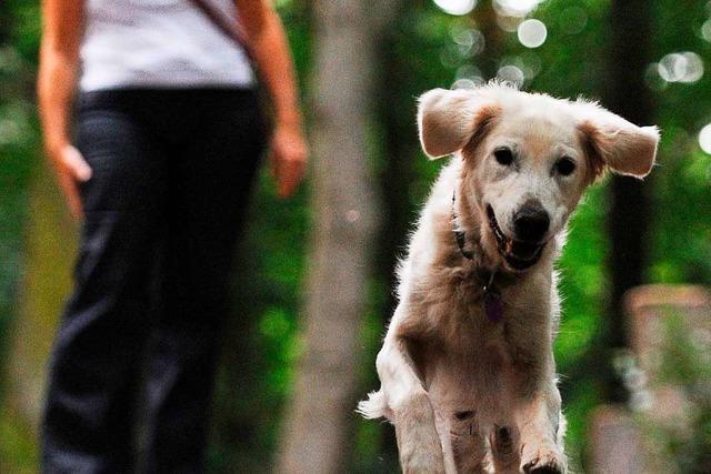 Wie macht man einen Hundeführerschein?