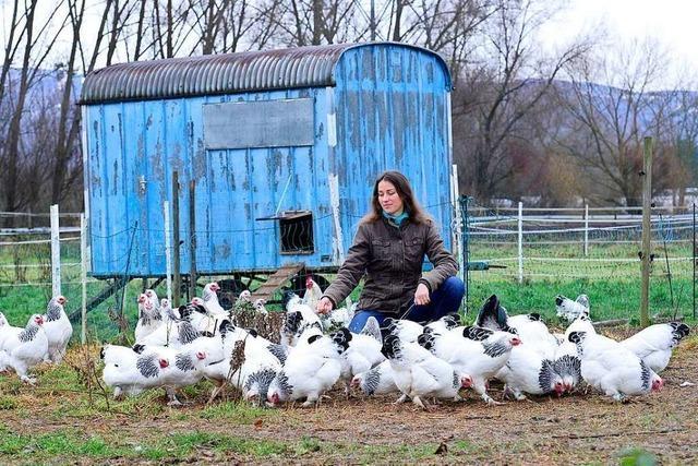 Opfinger Hof züchtet Hühner – und keine Küken müssen sterben